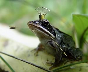 Was sind Märchen? Warum können Tiere in Märchen sprechen, wie dieser Froschkönig?